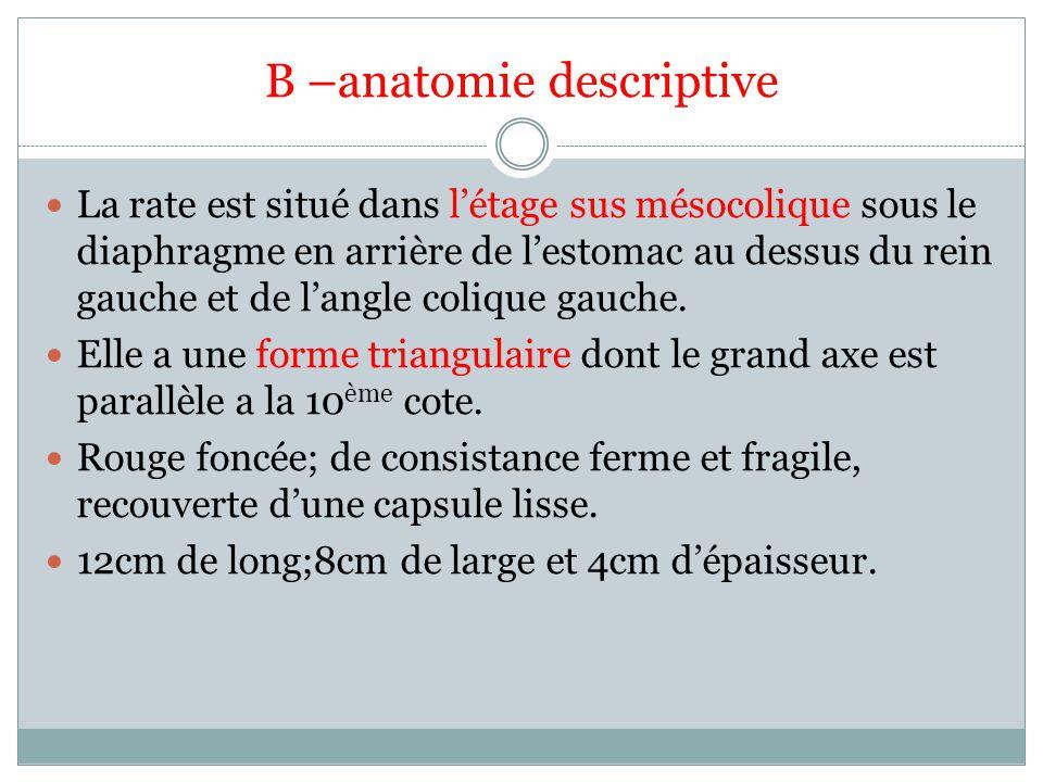 B –anatomie descriptive La rate est situé dans létage sus mésocolique sous le diaphragme en arrière de lestomac au dessus du rein gauche et de langle