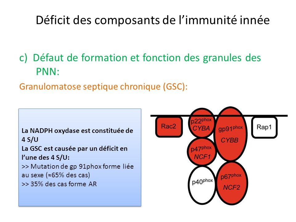 Déficit des composants de limmunité innée c) Défaut de formation et fonction des granules des PNN: Granulomatose septique chronique (GSC): La NADPH ox