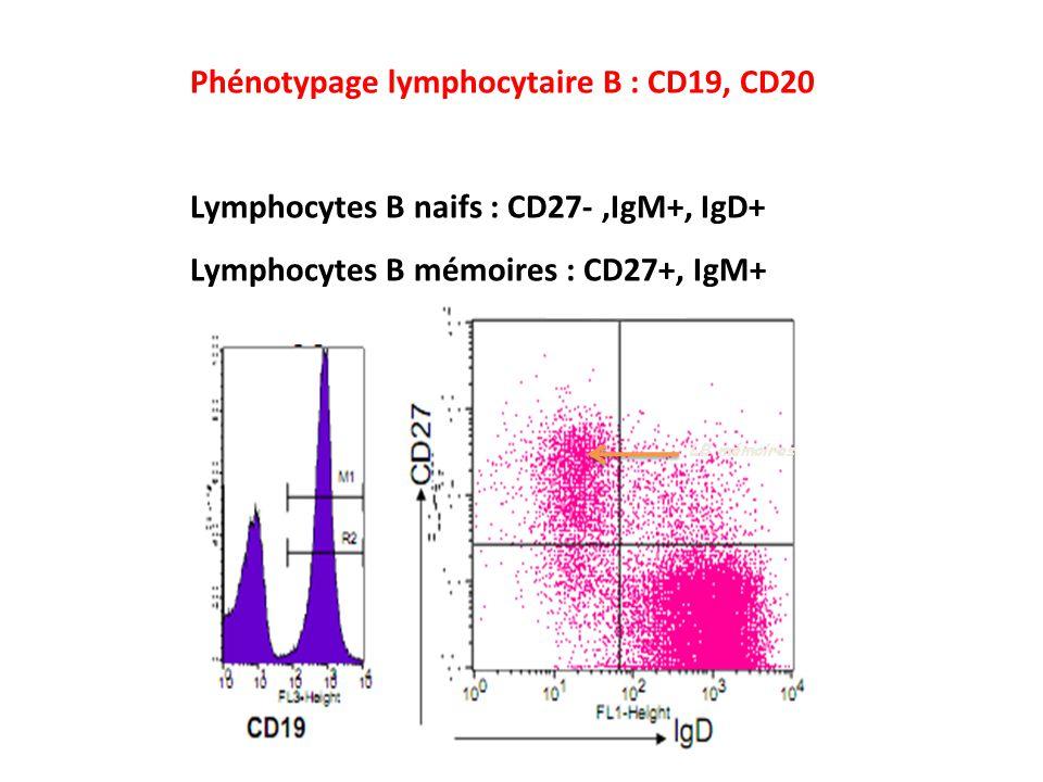 LB mémoires Phénotypage lymphocytaire B : CD19, CD20 Lymphocytes B naifs : CD27-,IgM+, IgD+ Lymphocytes B mémoires : CD27+, IgM+