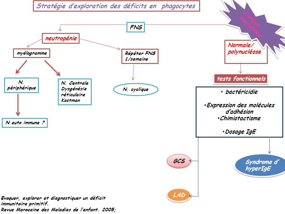 Stratégie dexploration des déficits en phagocytes Evoquer, explorer et diagnostiquer un déficit immunitaire primitif. Revue Marocaine des Maladies de