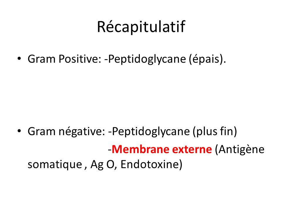 Récapitulatif Gram Positive: -Peptidoglycane (épais). Gram négative: -Peptidoglycane (plus fin) -Membrane externe (Antigène somatique, Ag O, Endotoxin