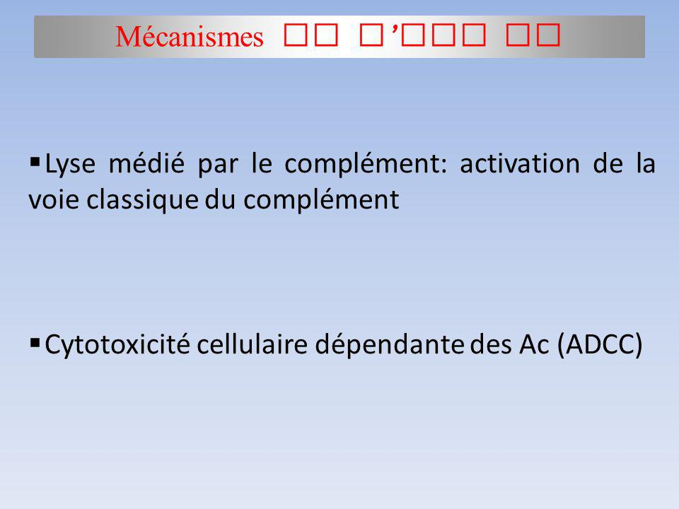 Mécanismes de l HSP II Activation du complément