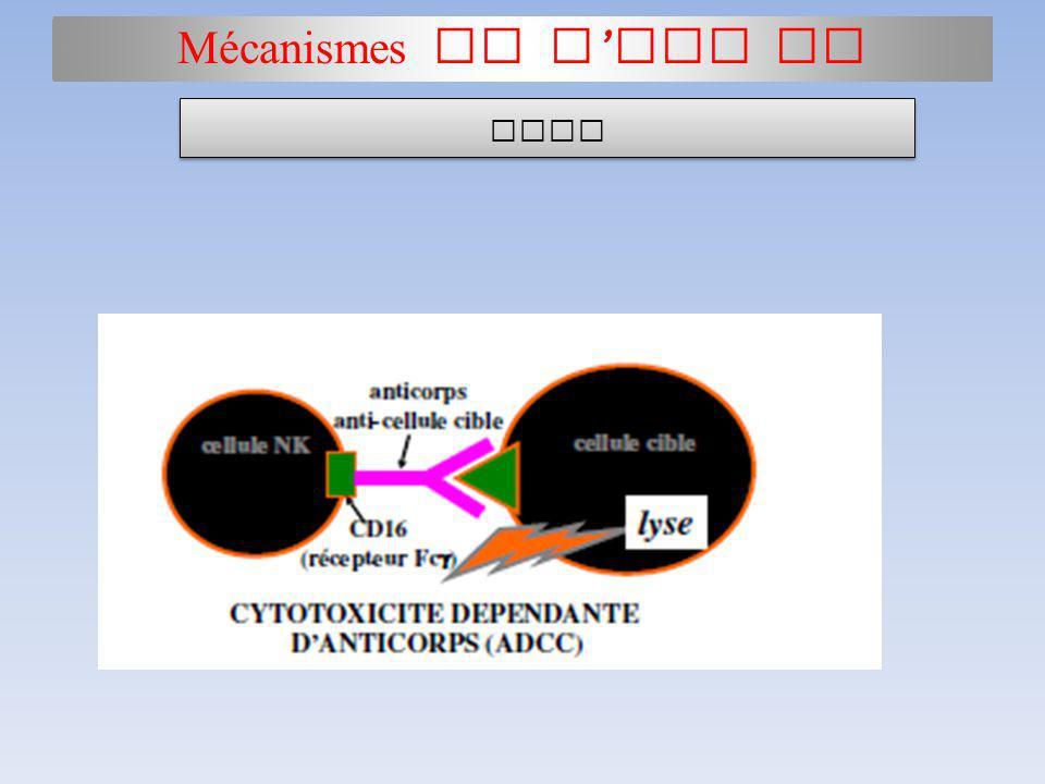Mécanismes de l HSP II ADCC