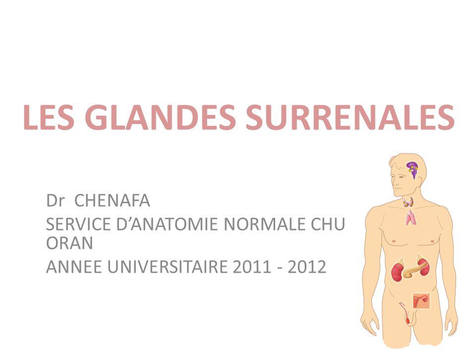 LES GLANDES SURRENALES Dr CHENAFA SERVICE DANATOMIE NORMALE CHU ORAN ANNEE UNIVERSITAIRE 2011 - 2012