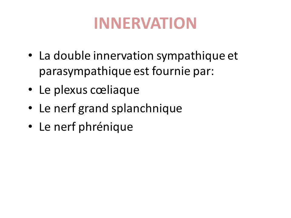 La double innervation sympathique et parasympathique est fournie par: Le plexus cœliaque Le nerf grand splanchnique Le nerf phrénique INNERVATION