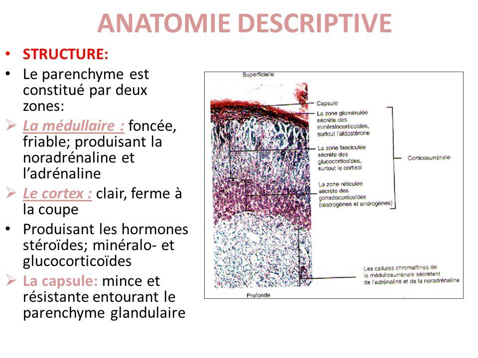 STRUCTURE: Le parenchyme est constitué par deux zones: La médullaire : foncée, friable; produisant la noradrénaline et ladrénaline Le cortex : clair,