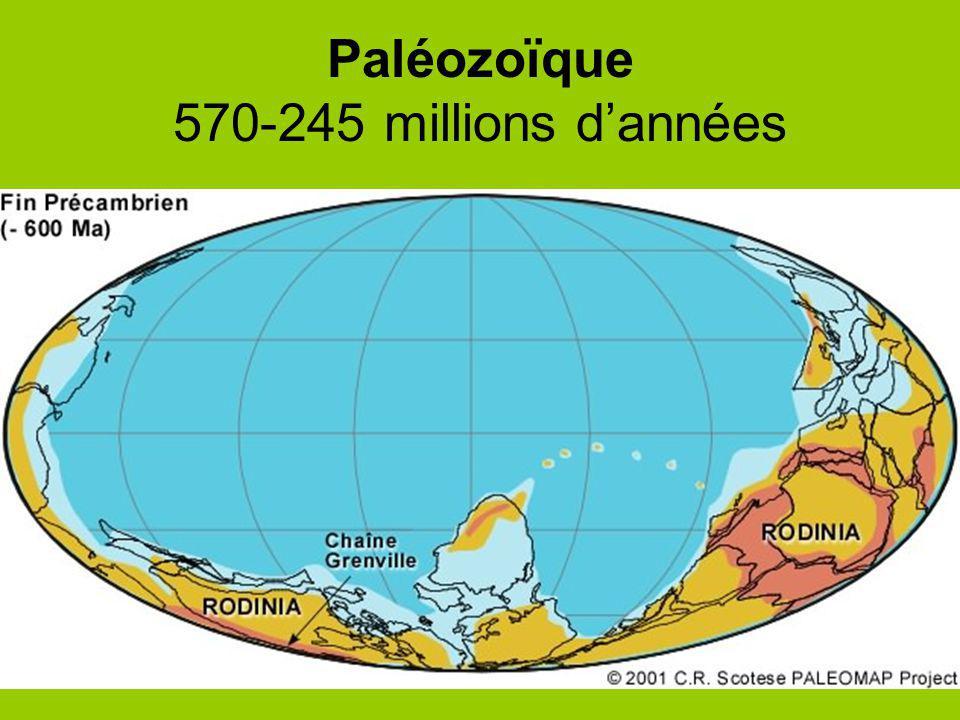Paléozoïque 570-245 millions dannées