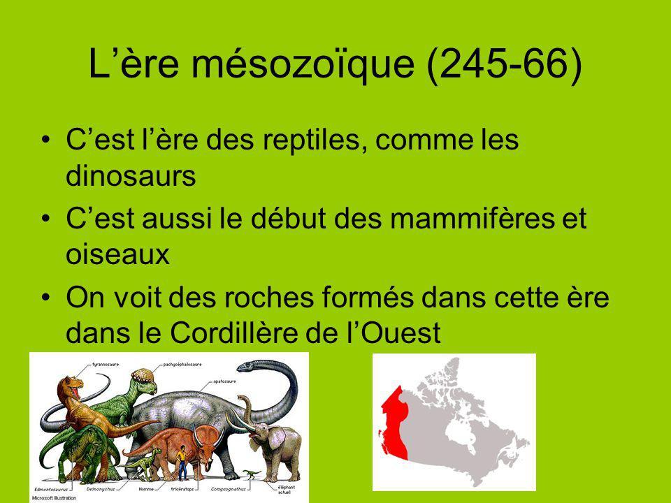 Lère mésozoïque (245-66) Cest lère des reptiles, comme les dinosaurs Cest aussi le début des mammifères et oiseaux On voit des roches formés dans cett
