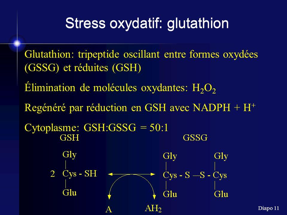 Diapo 11 Stress oxydatif: glutathion Glutathion: tripeptide oscillant entre formes oxydées (GSSG) et réduites (GSH) Élimination de molécules oxydantes: H 2 O 2 Regénéré par réduction en GSH avec NADPH + H + Cytoplasme: GSH:GSSG = 50:1