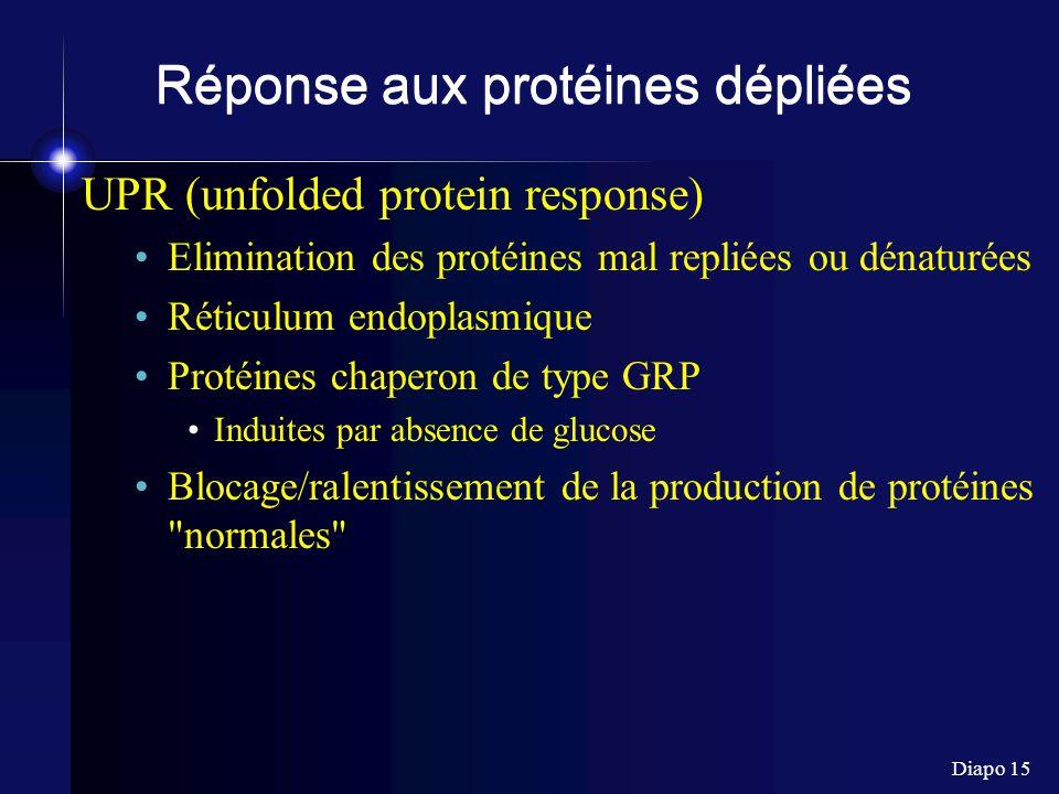 Diapo 15 Réponse aux protéines dépliées UPR (unfolded protein response) Elimination des protéines mal repliées ou dénaturées Réticulum endoplasmique Protéines chaperon de type GRP Induites par absence de glucose Blocage/ralentissement de la production de protéines normales