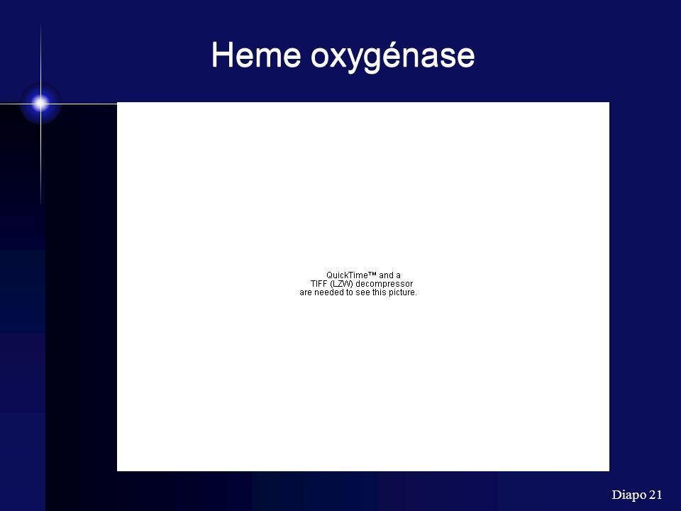 Diapo 21 Heme oxygénase