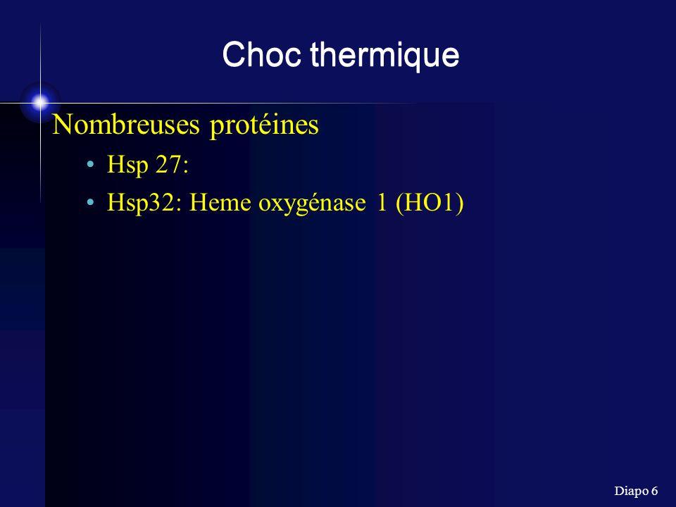 Diapo 17 Heme oxygenase Heme ----(HO)----> Biliverdine + Fe 2+ + CO 3 types HO I : inductible (réponse à certains stress) 32 kDa = HSP32 HO 2 : constitutive 36 kDa HO 3: cerveau (?) ==> gènes différents (pas isoformes)
