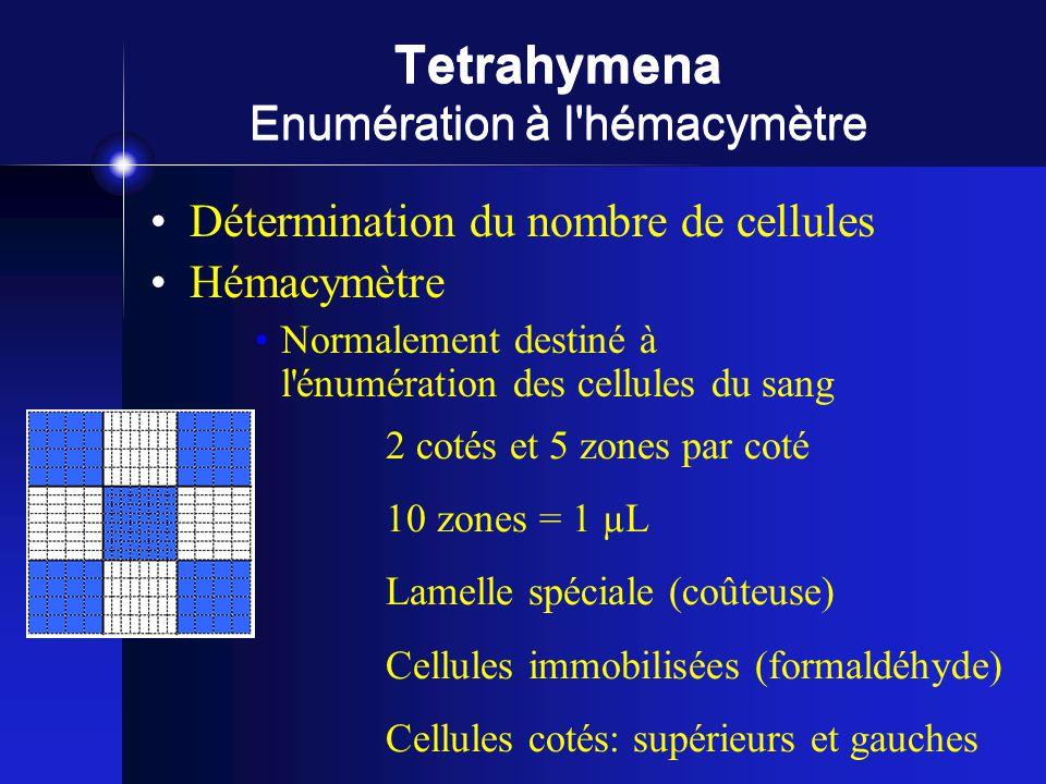 Tetrahymena Enumération à l hémacymètre Détermination du nombre de cellules Hémacymètre Normalement destiné à l énumération des cellules du sang 2 cotés et 5 zones par coté 10 zones = 1 µL Lamelle spéciale (coûteuse) Cellules immobilisées (formaldéhyde) Cellules cotés: supérieurs et gauches