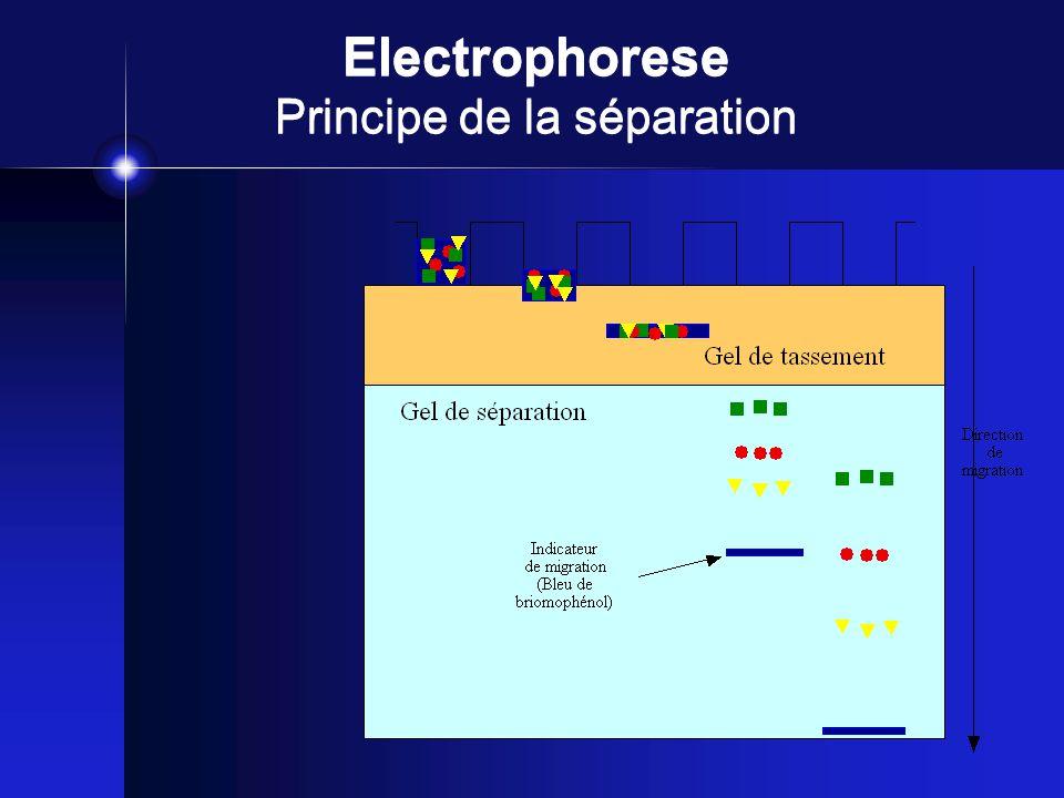 Electrophorese Principe de la séparation