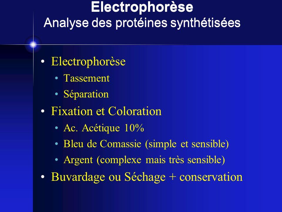Electrophorèse Analyse des protéines synthétisées Electrophorèse Tassement Séparation Fixation et Coloration Ac.