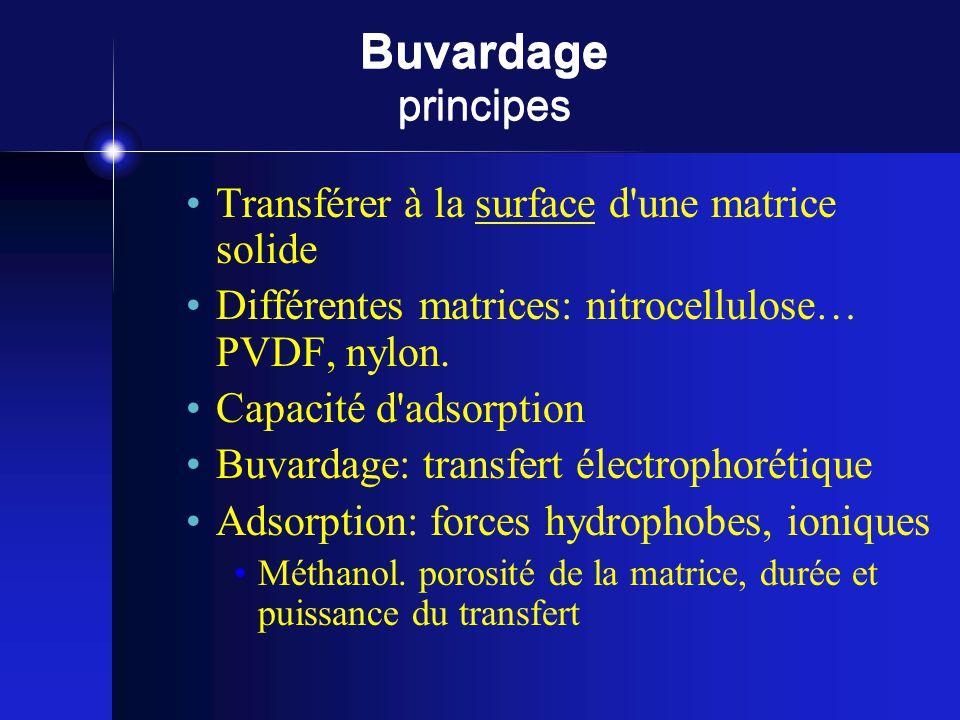 Buvardage principes Transférer à la surface d'une matrice solide Différentes matrices: nitrocellulose… PVDF, nylon. Capacité d'adsorption Buvardage: t