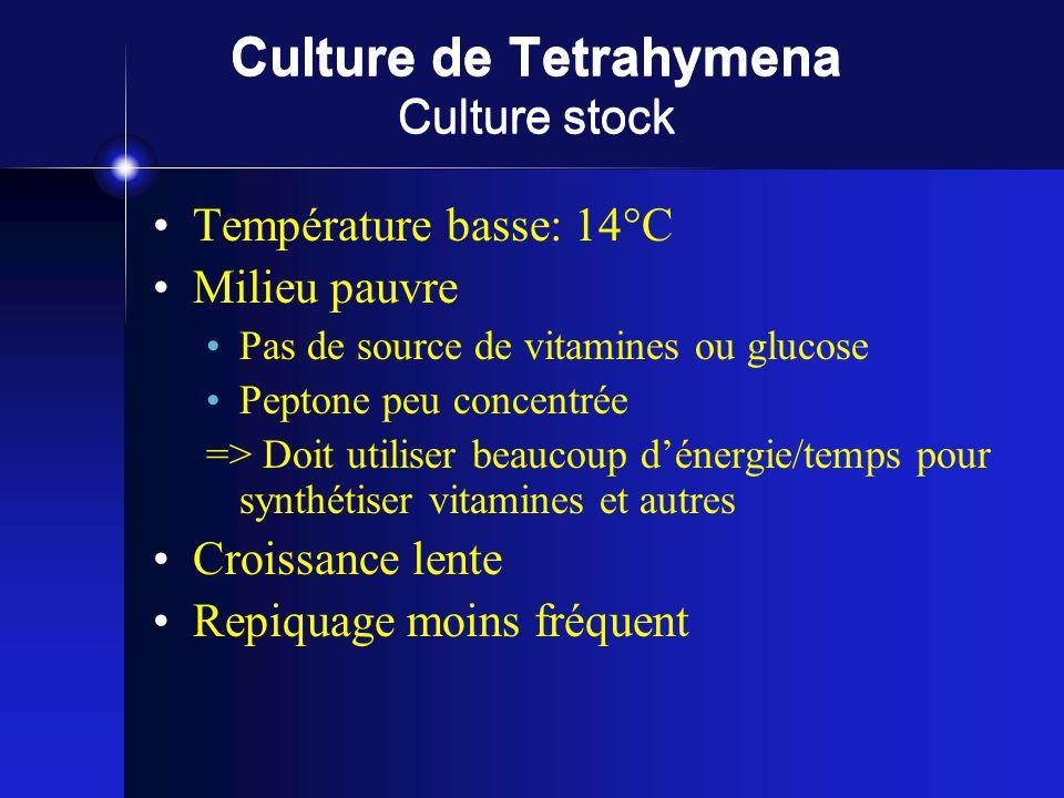 Culture de Tetrahymena Culture stock Température basse: 14°C Milieu pauvre Pas de source de vitamines ou glucose Peptone peu concentrée => Doit utiliser beaucoup dénergie/temps pour synthétiser vitamines et autres Croissance lente Repiquage moins fréquent