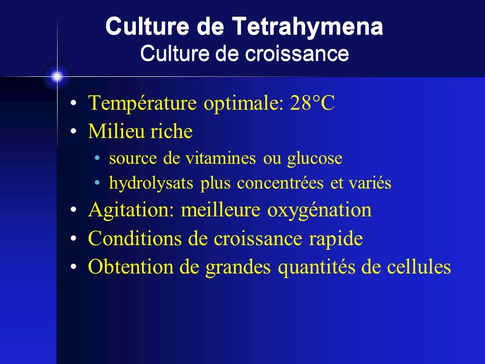Culture de Tetrahymena Culture de croissance Température optimale: 28°C Milieu riche source de vitamines ou glucose hydrolysats plus concentrées et variés Agitation: meilleure oxygénation Conditions de croissance rapide Obtention de grandes quantités de cellules