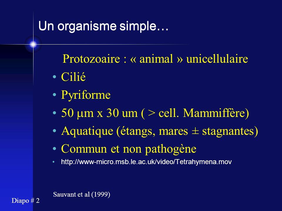 Diapo # 3 et complexe… Eucaryote Noyau, mitochondries et organites Cytosquelette Systèmes de signalisation développés Maturation des protéines, sécrétion, etc Pertinence pour étude des mécanismes des organismes supérieurs Sauvant et al (1999)