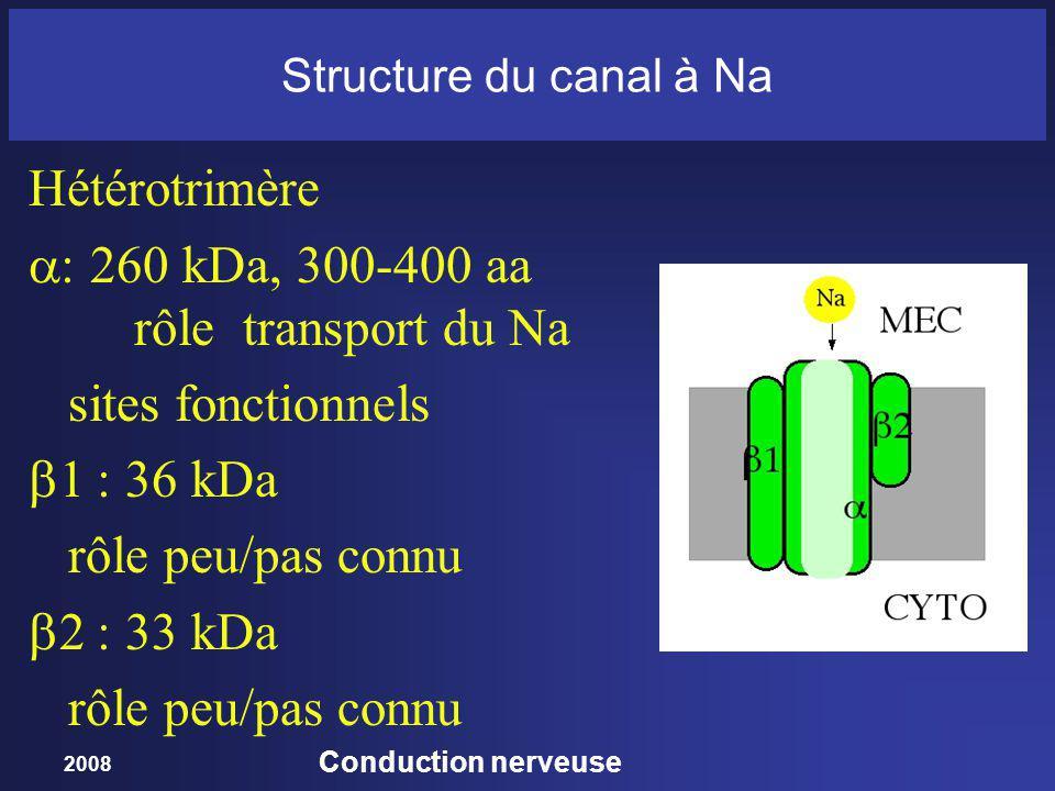 2008 Conduction nerveuse Structure du canal à Na Hétérotrimère : 260 kDa, 300-400 aa rôle transport du Na sites fonctionnels 1 : 36 kDa rôle peu/pas connu 2 : 33 kDa rôle peu/pas connu
