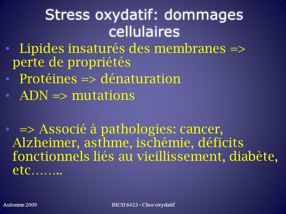 Stress oxydatif: dommages cellulaires Lipides insaturés des membranes => perte de propriétés Protéines => dénaturation ADN => mutations => Associé à pathologies: cancer, Alzheimer, asthme, ischémie, déficits fonctionnels liés au vieillissement, diabète, etc……..