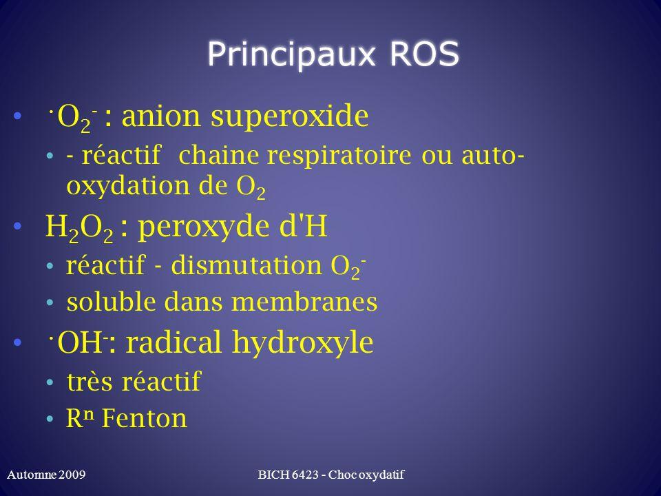 Principaux DRO (suite) HOCl: acide hypochloreux très réactif: acides aminés, thiol soluble dans membranes Autres: hydroperoxydes organiques (ROOH), oxyde nitrique ( NO), peroxyde nitrique (OONO - ) Automne 2009BICH 6423 - Choc oxydatif