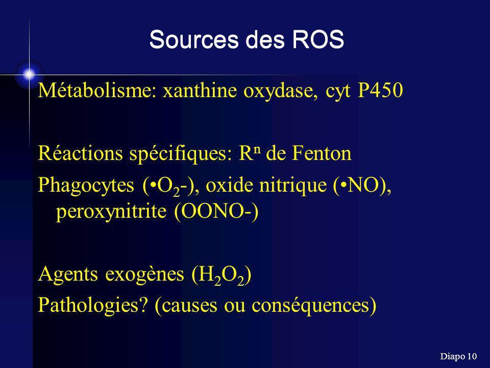 Diapo 10 Sources des ROS Métabolisme: xanthine oxydase, cyt P450 Réactions spécifiques: R n de Fenton Phagocytes (O 2 -), oxide nitrique (NO), peroxyn
