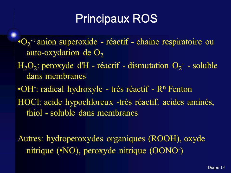 Diapo 13 Principaux ROS O 2 - : anion superoxide - réactif - chaine respiratoire ou auto-oxydation de O 2 H 2 O 2 : peroxyde d H - réactif - dismutation O 2 - - soluble dans membranes OH - : radical hydroxyle - très réactif - R n Fenton HOCl: acide hypochloreux -très réactif: acides aminés, thiol - soluble dans membranes Autres: hydroperoxydes organiques (ROOH), oxyde nitrique (NO), peroxyde nitrique (OONO - )