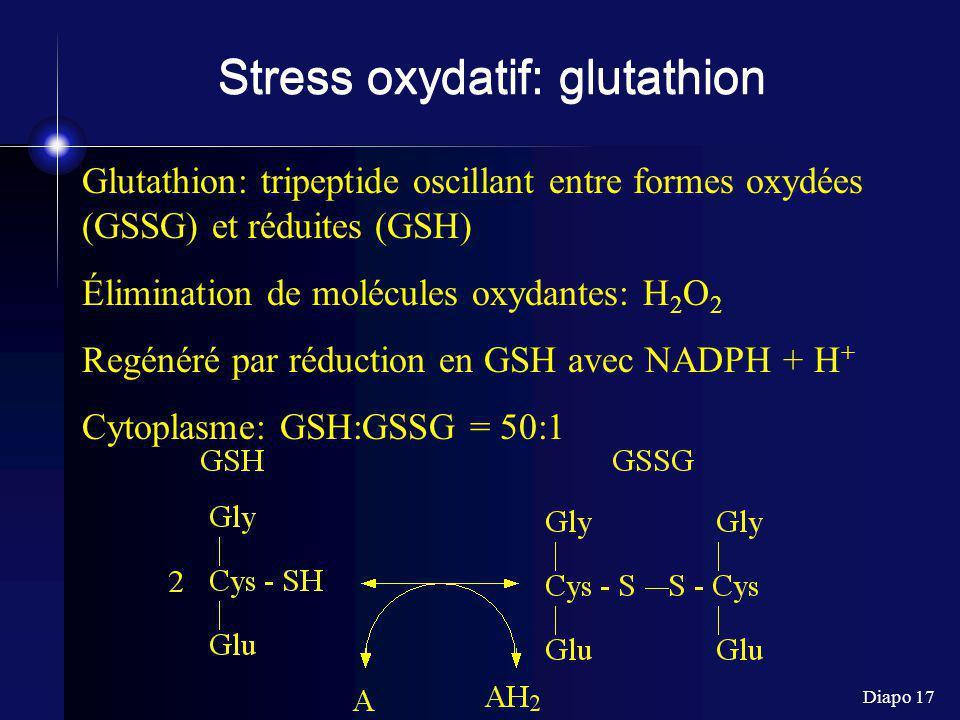 Diapo 17 Stress oxydatif: glutathion Glutathion: tripeptide oscillant entre formes oxydées (GSSG) et réduites (GSH) Élimination de molécules oxydantes: H 2 O 2 Regénéré par réduction en GSH avec NADPH + H + Cytoplasme: GSH:GSSG = 50:1