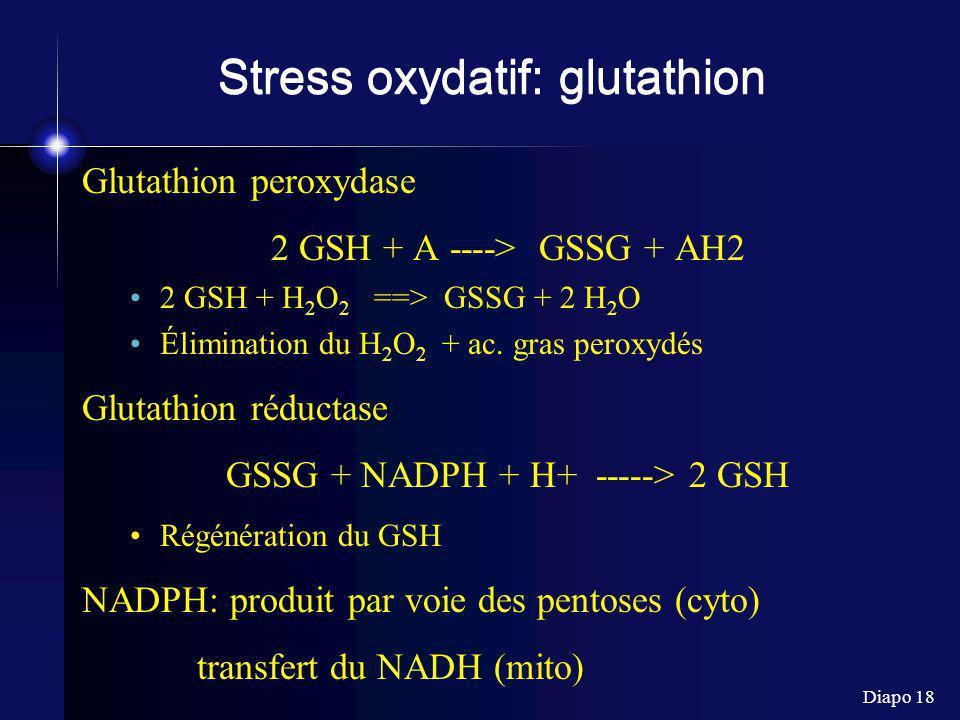 Diapo 18 Stress oxydatif: glutathion Glutathion peroxydase 2 GSH + A ----> GSSG + AH2 2 GSH + H 2 O 2 ==> GSSG + 2 H 2 O Élimination du H 2 O 2 + ac.