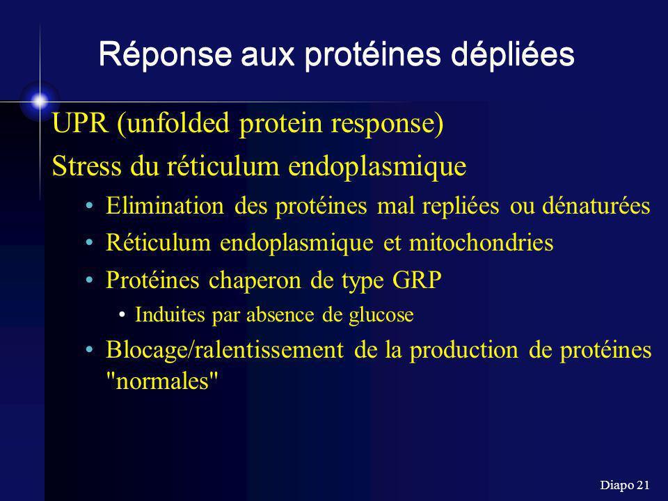 Diapo 21 Réponse aux protéines dépliées UPR (unfolded protein response) Stress du réticulum endoplasmique Elimination des protéines mal repliées ou dénaturées Réticulum endoplasmique et mitochondries Protéines chaperon de type GRP Induites par absence de glucose Blocage/ralentissement de la production de protéines normales