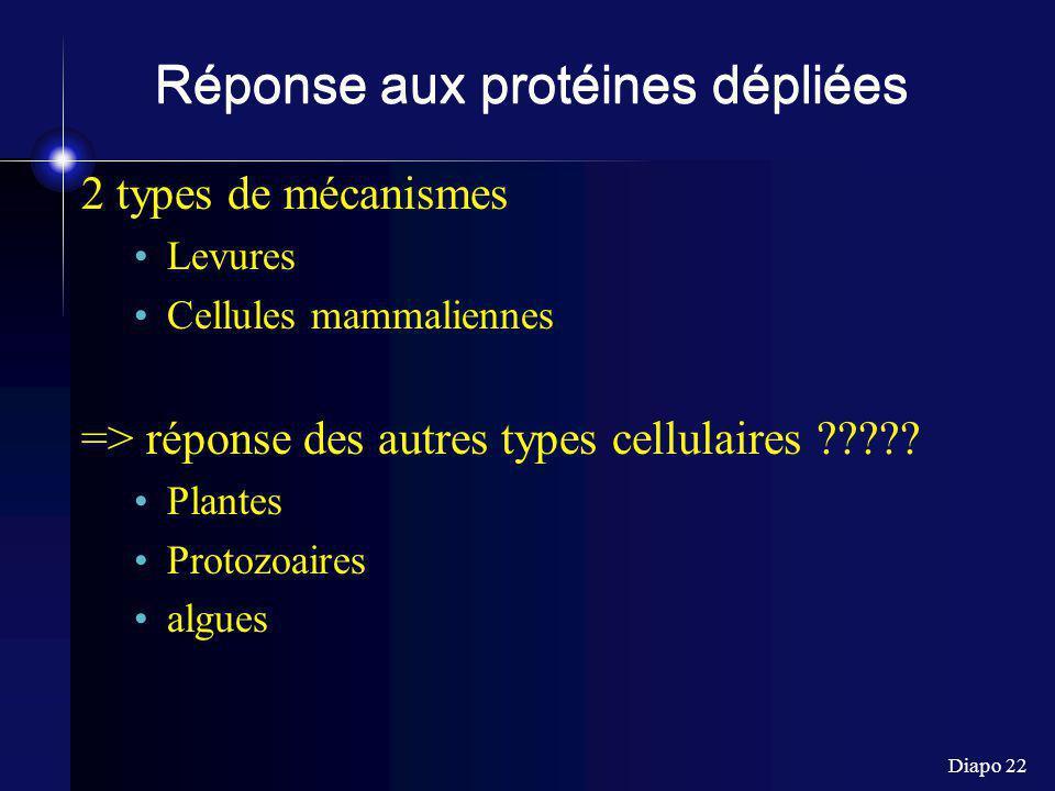 Diapo 22 Réponse aux protéines dépliées 2 types de mécanismes Levures Cellules mammaliennes => réponse des autres types cellulaires ????? Plantes Prot