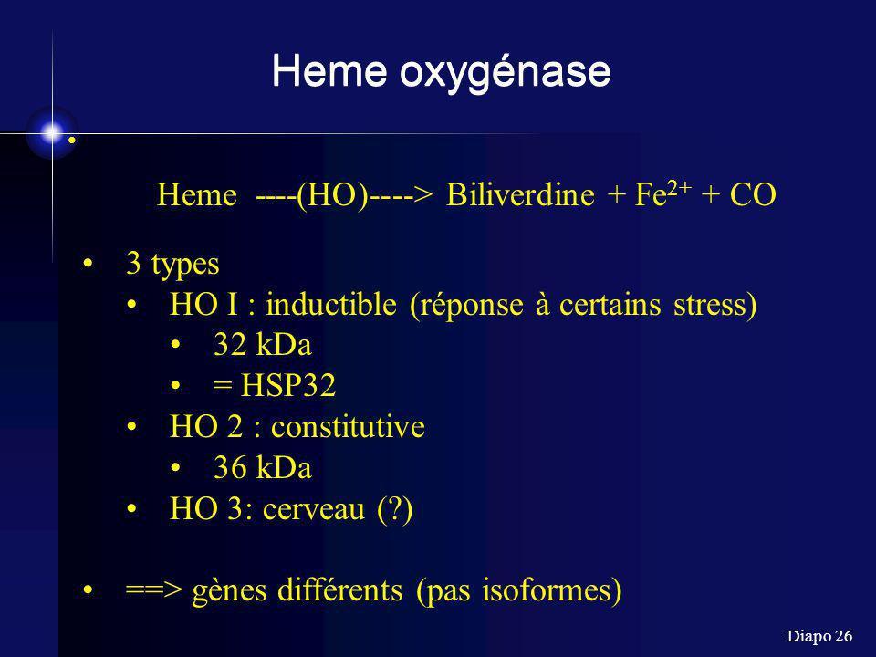 Diapo 26 Heme oxygénase Heme ----(HO)----> Biliverdine + Fe 2+ + CO 3 types HO I : inductible (réponse à certains stress) 32 kDa = HSP32 HO 2 : consti