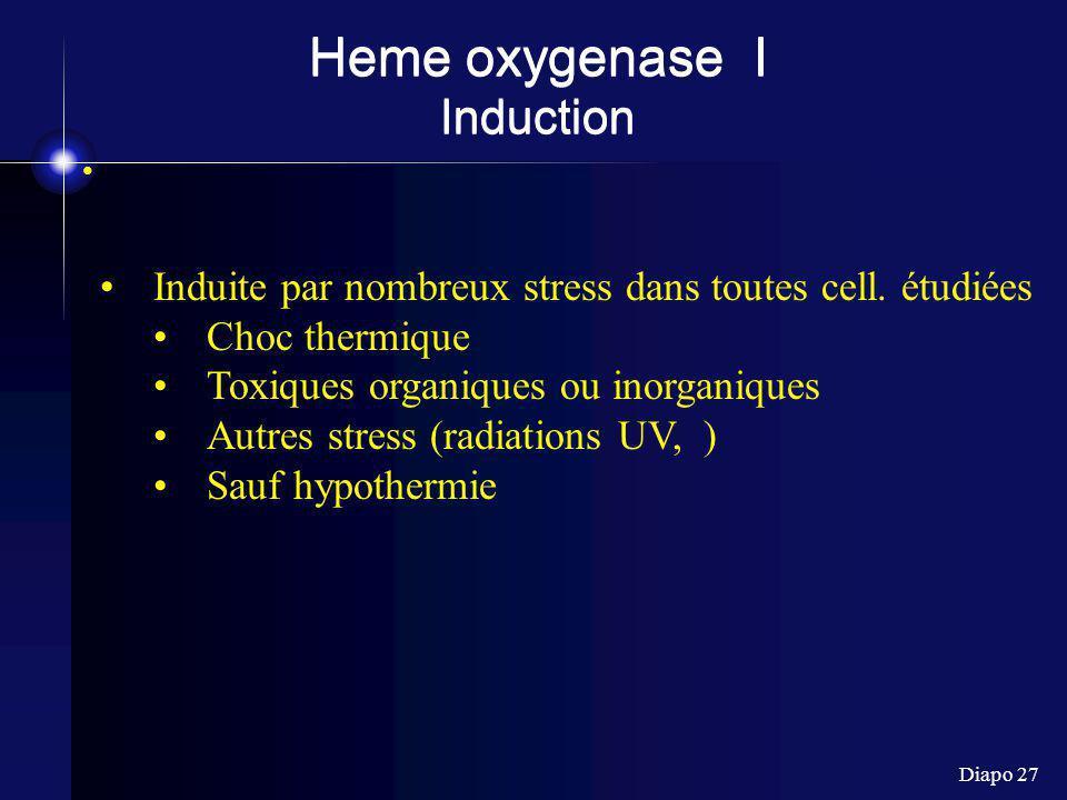 Diapo 27 Heme oxygenase I Induction Induite par nombreux stress dans toutes cell.