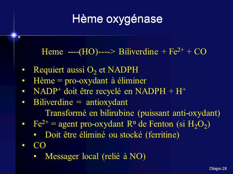Diapo 28 Hème oxygénase Heme ----(HO)----> Biliverdine + Fe 2+ + CO Requiert aussi O 2 et NADPH Hème = pro-oxydant à éliminer NADP + doit être recyclé en NADPH + H + Biliverdine = antioxydant Transformé en bilirubine (puissant anti-oxydant) Fe 2+ = agent pro-oxydant R n de Fenton (si H 2 O 2 ) Doit être éliminé ou stocké (ferritine) CO Messager local (relié à NO)