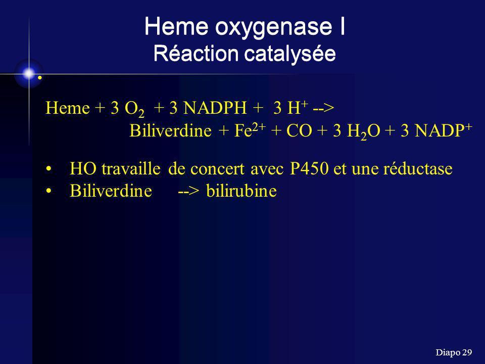 Diapo 29 Heme oxygenase I Réaction catalysée Heme + 3 O 2 + 3 NADPH + 3 H + --> Biliverdine + Fe 2+ + CO + 3 H 2 O + 3 NADP + HO travaille de concert avec P450 et une réductase Biliverdine --> bilirubine