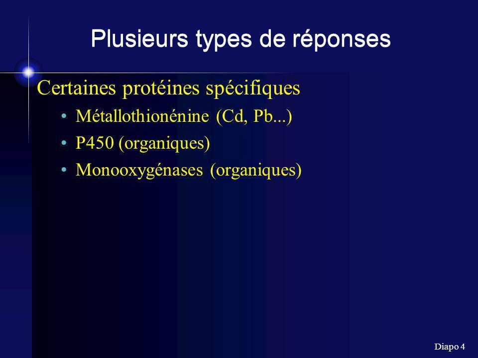 Diapo 4 Plusieurs types de réponses Certaines protéines spécifiques Métallothionénine (Cd, Pb...) P450 (organiques) Monooxygénases (organiques)