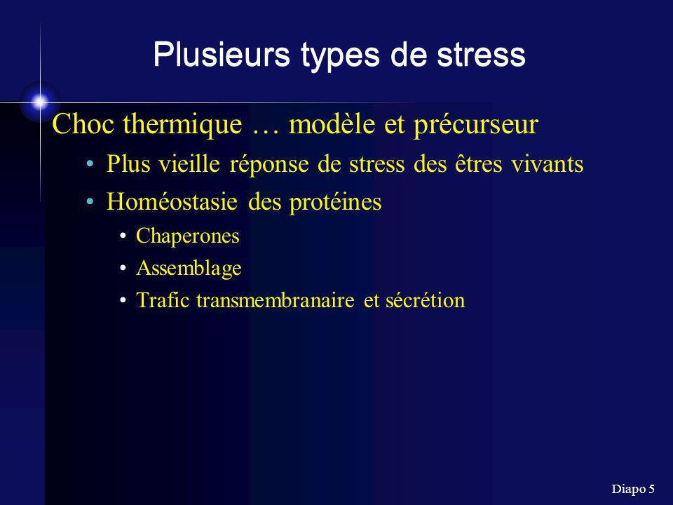 Diapo 26 Heme oxygénase Heme ----(HO)----> Biliverdine + Fe 2+ + CO 3 types HO I : inductible (réponse à certains stress) 32 kDa = HSP32 HO 2 : constitutive 36 kDa HO 3: cerveau (?) ==> gènes différents (pas isoformes)