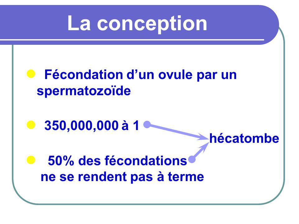 La conception Fécondation dun ovule par un spermatozoïde 350,000,000 à 1 50% des fécondations ne se rendent pas à terme hécatombe