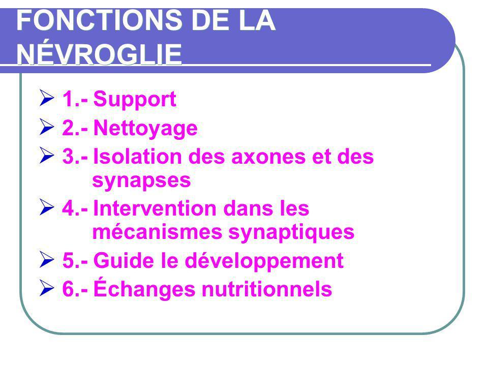 FONCTIONS DE LA NÉVROGLIE 1.- Support 2.- Nettoyage 3.- Isolation des axones et des synapses 4.- Intervention dans les mécanismes synaptiques 5.- Guid
