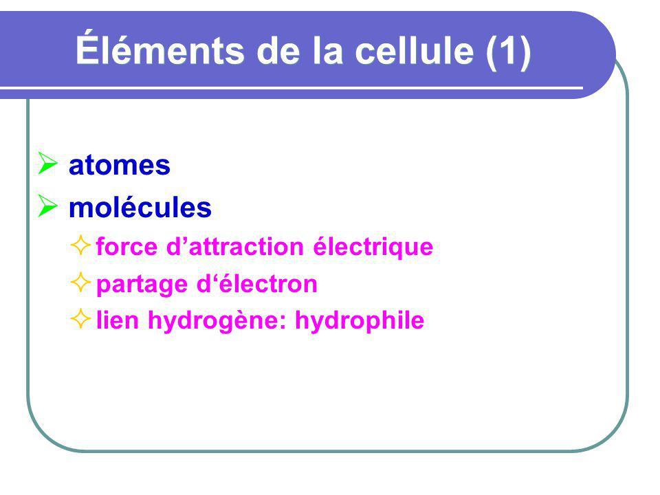 Éléments de la cellule (1) atomes molécules force dattraction électrique partage délectron lien hydrogène: hydrophile
