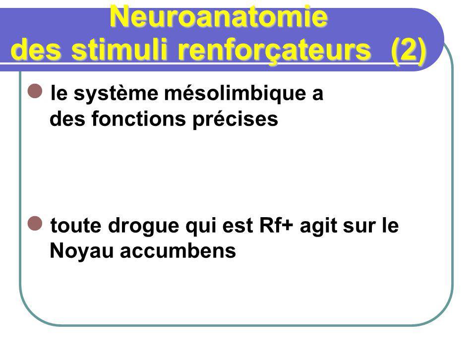 Neuroanatomie des stimuli renforçateurs (2) le système mésolimbique a des fonctions précises toute drogue qui est Rf+ agit sur le Noyau accumbens