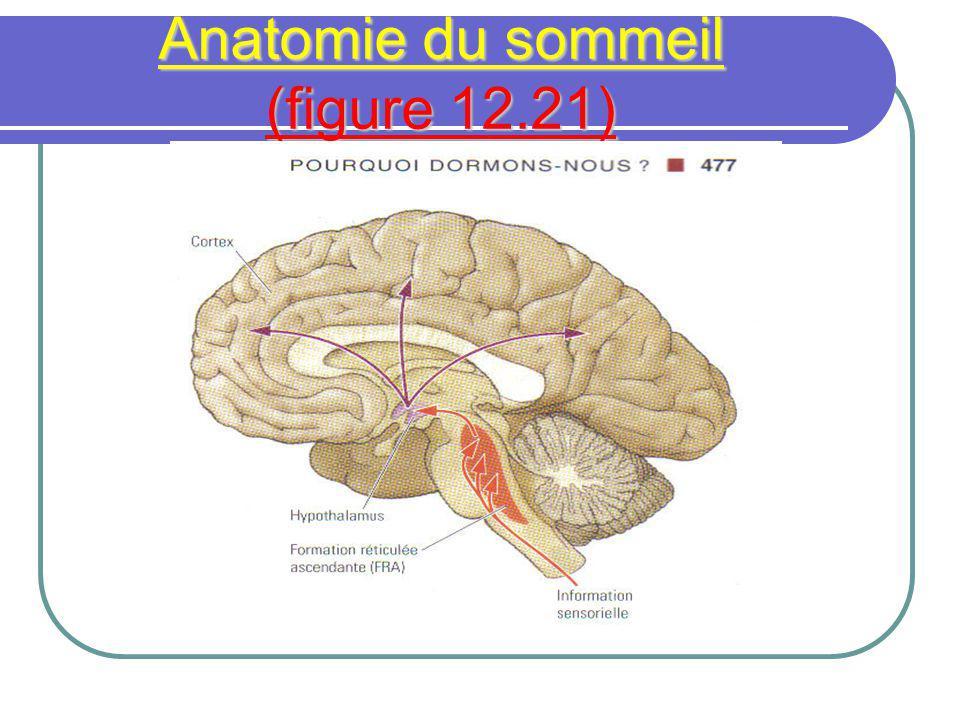 Anatomie du sommeil (figure 12.21)