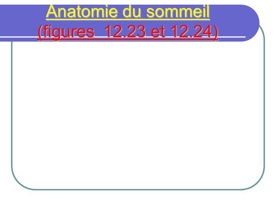 Anatomie du sommeil (figures 12.23 et 12.24)