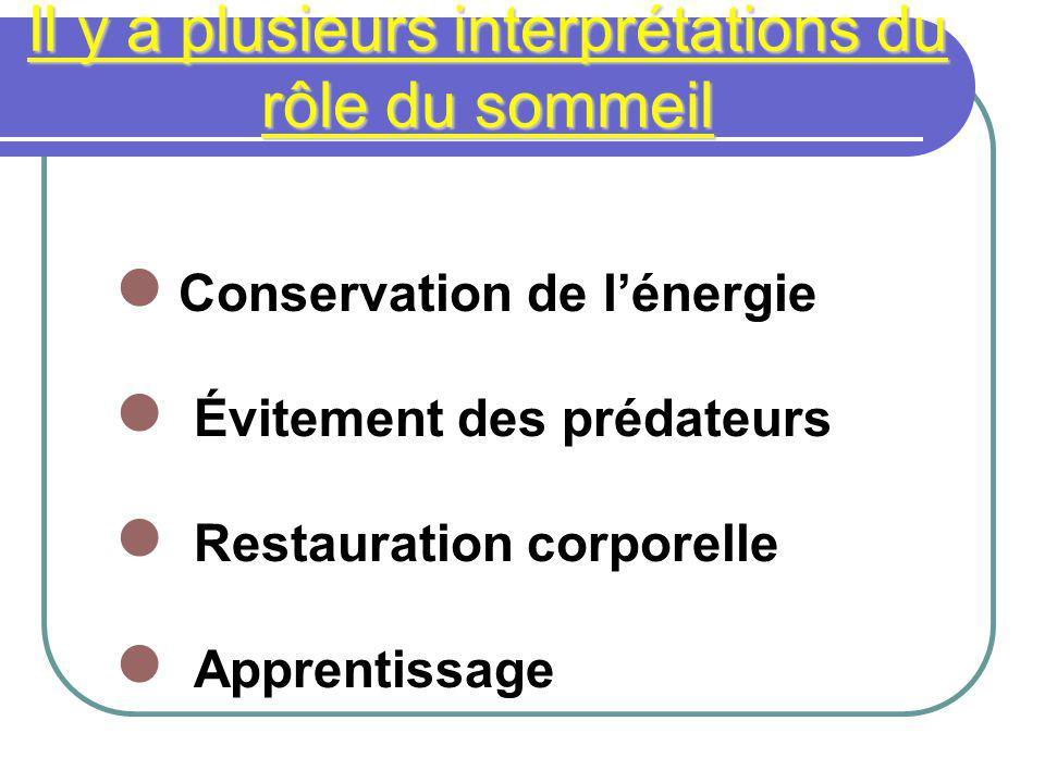 Il y a plusieurs interprétations du rôle du sommeil Conservation de lénergie Évitement des prédateurs Restauration corporelle Apprentissage