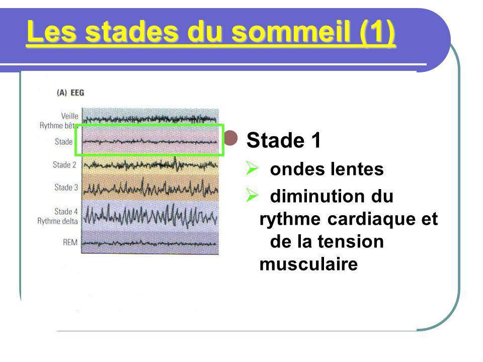 Les stades du sommeil (1) Stade 1 ondes lentes diminution du rythme cardiaque et de la tension musculaire