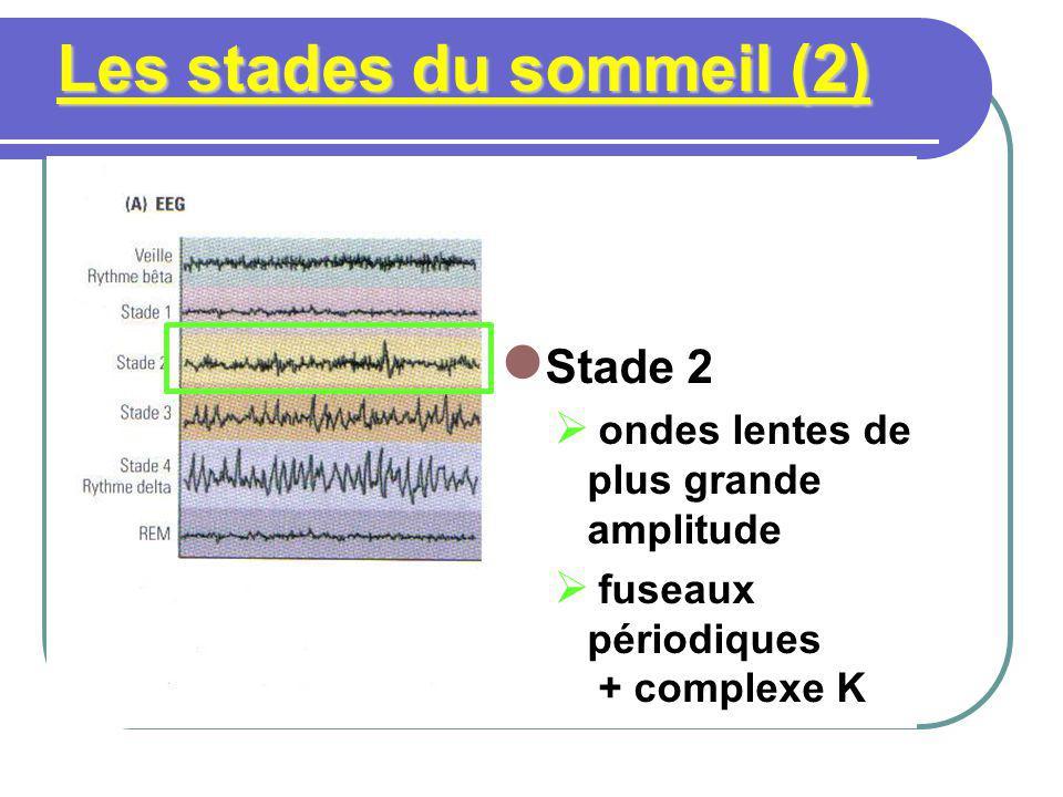 Les stades du sommeil (3) Stade 3 fuseaux et ondes lentes de forte amplitude diminution RC cardiaque, TM musculaire, RR respiration synchronisation MO et des pics dactivité cérébrale