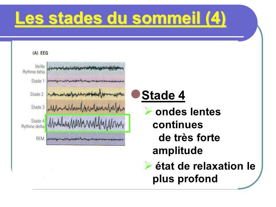 Les stades du sommeil (5) Stade 5 rebond sympathique paralysie musculaire généralisée sauf: mouvements oculaires rapides (MOR ou REM) activité EEG ± semblable à léveil