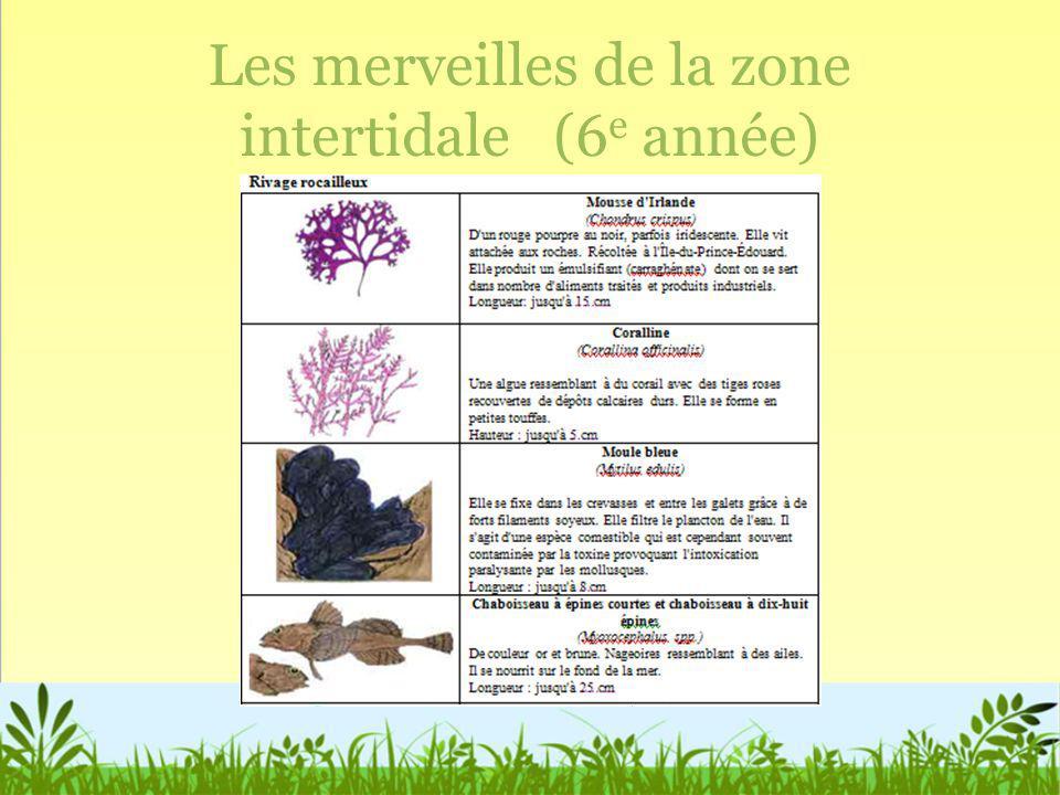 Les merveilles de la zone intertidale (6 e année)