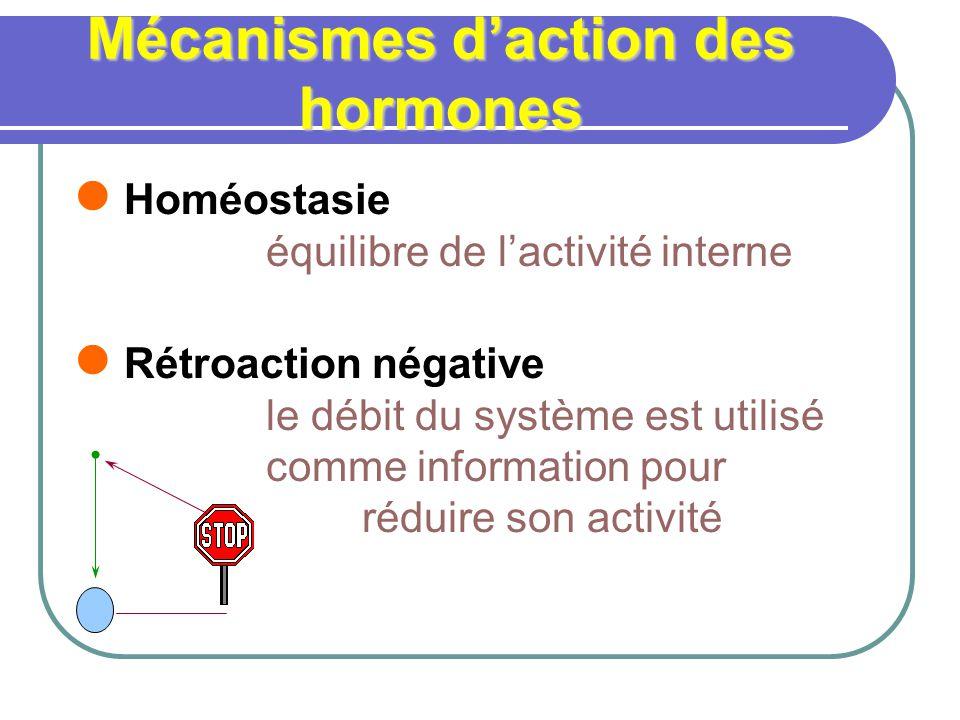 Mécanismes daction des hormones Homéostasie équilibre de lactivité interne Rétroaction négative le débit du système est utilisé comme information pour réduire son activité